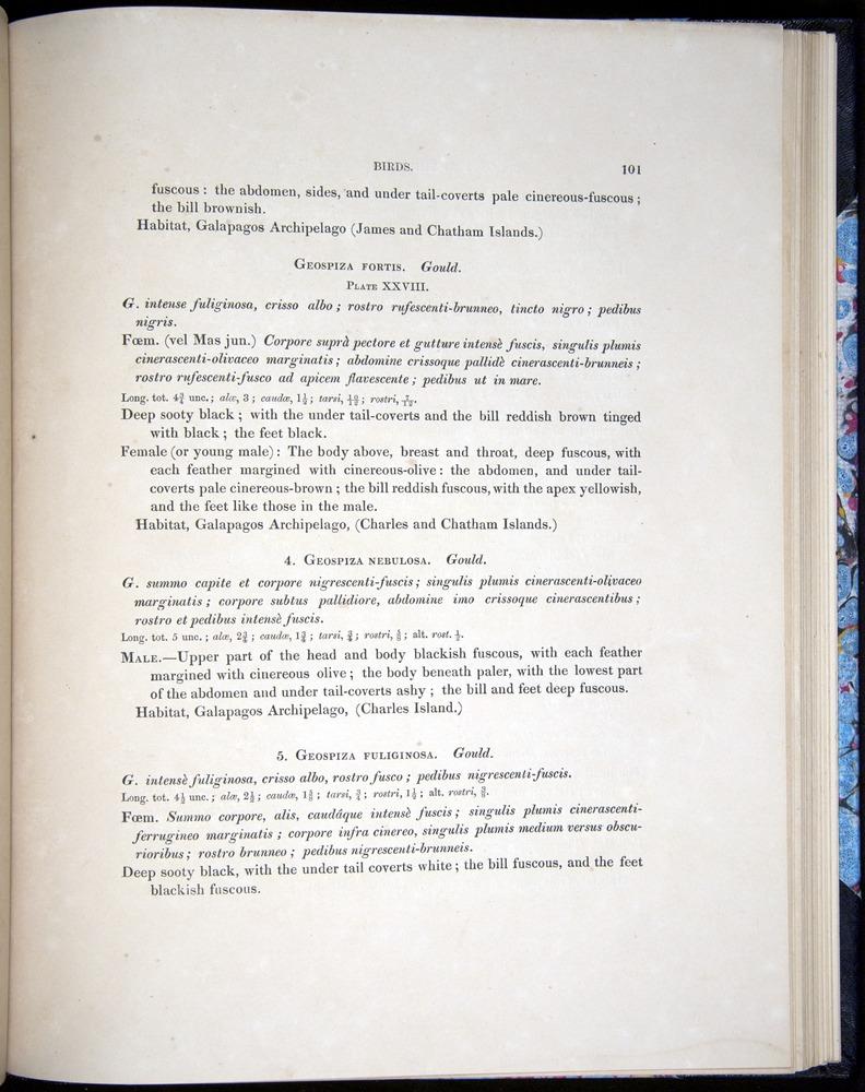Image of Darwin-F8.2-1838-00101
