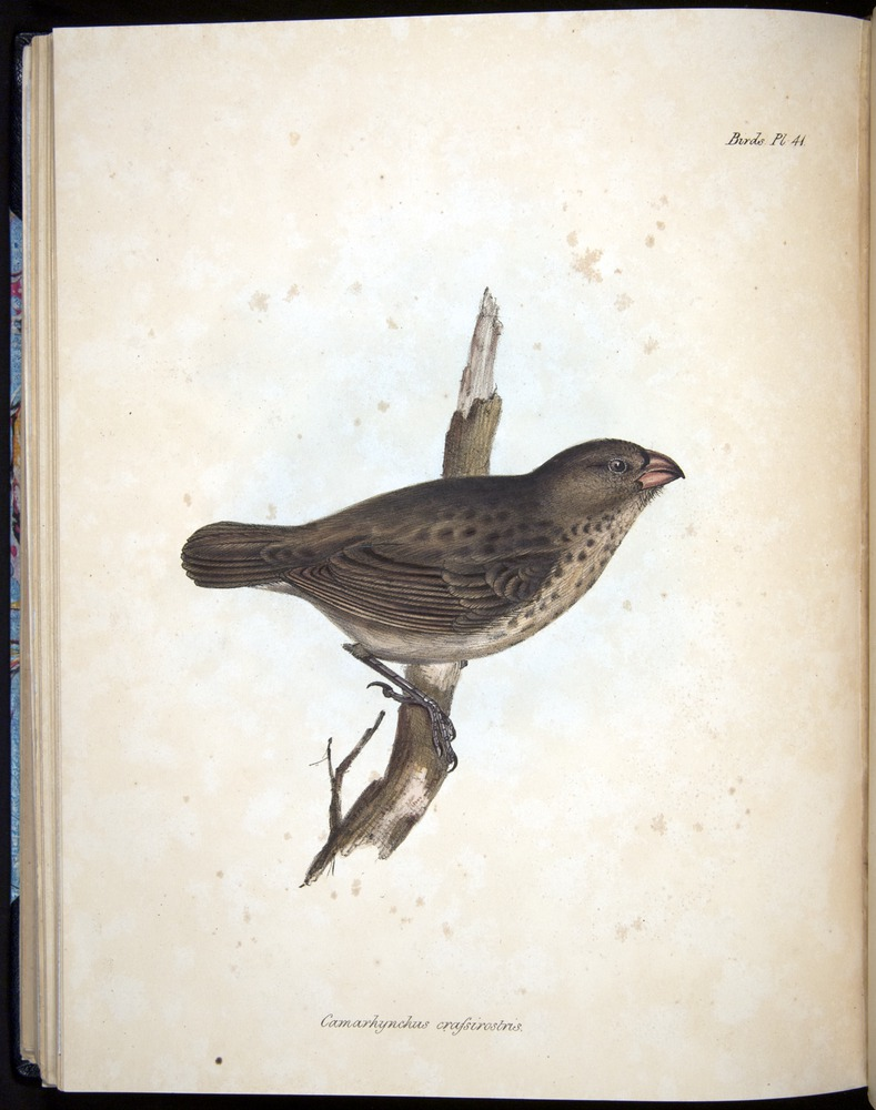 Image of Darwin-F8.2-1838-00102-cf41