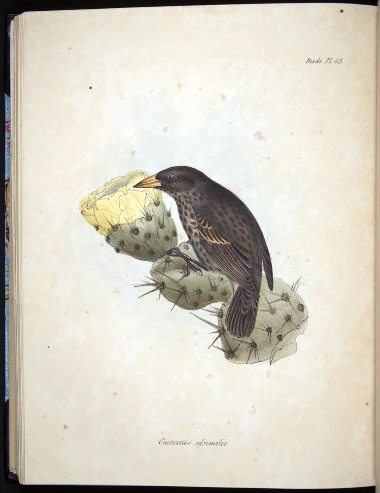 Image of Darwin-F8.2-1838-00104-bf43