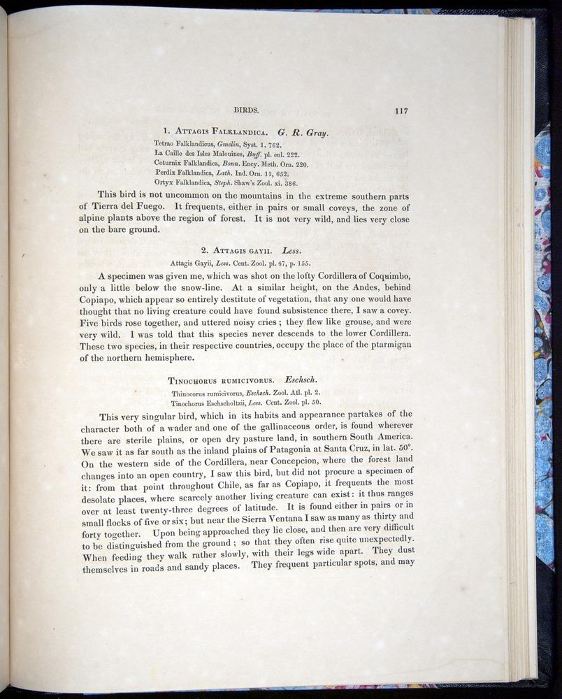 Image of Darwin-F8.2-1838-00117