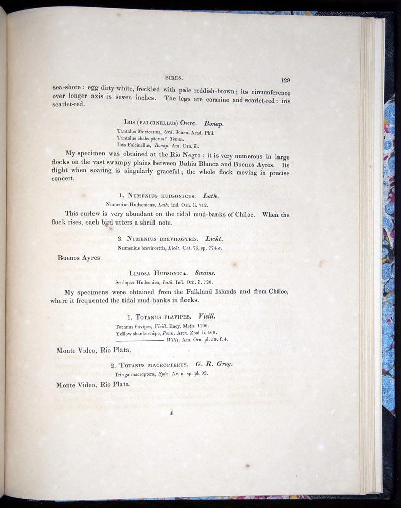 Image of Darwin-F8.2-1838-00129