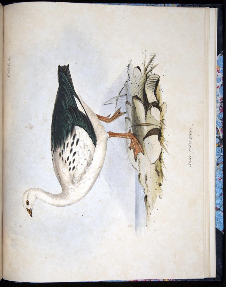 Image of Darwin-F8.2-1838-00134-f50