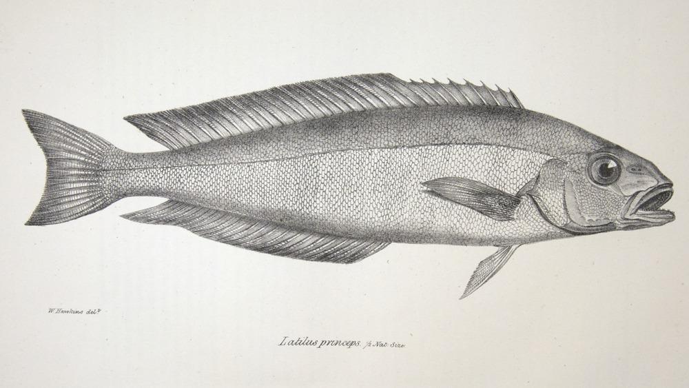 Image of Darwin-F8.3-1838-zzzzzz-det-00052-cf11