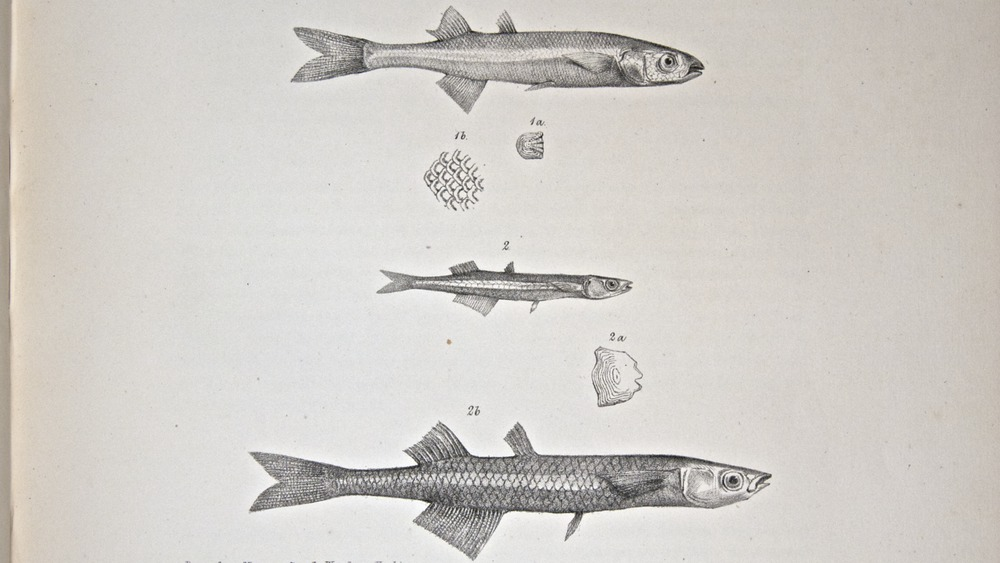 Image of Darwin-F8.3-1838-zzzzzz-det-00078-cf16