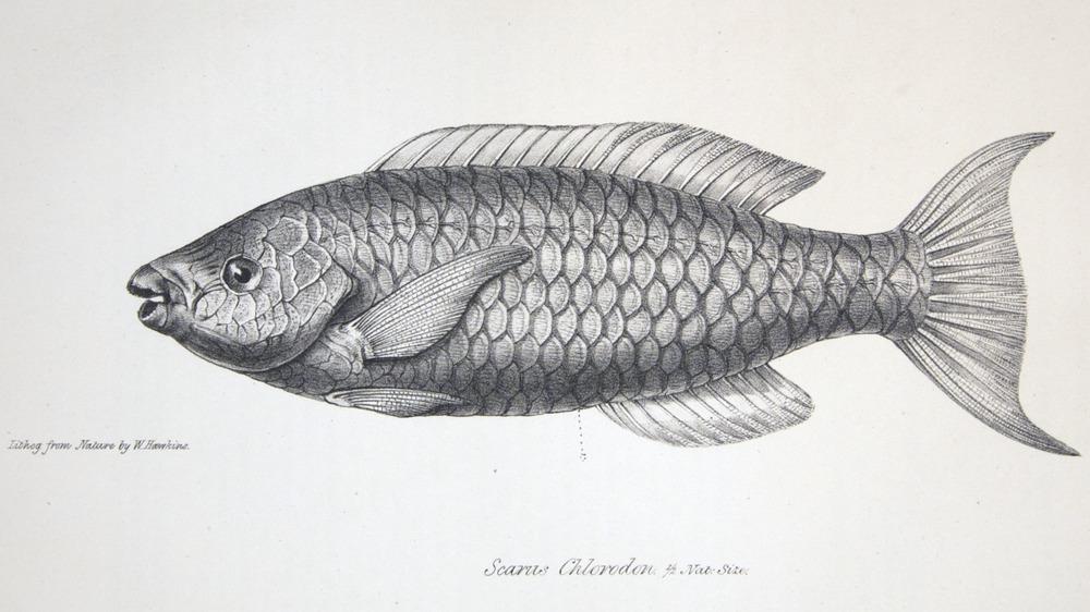 Image of Darwin-F8.3-1838-zzzzzz-det-00104-bf21