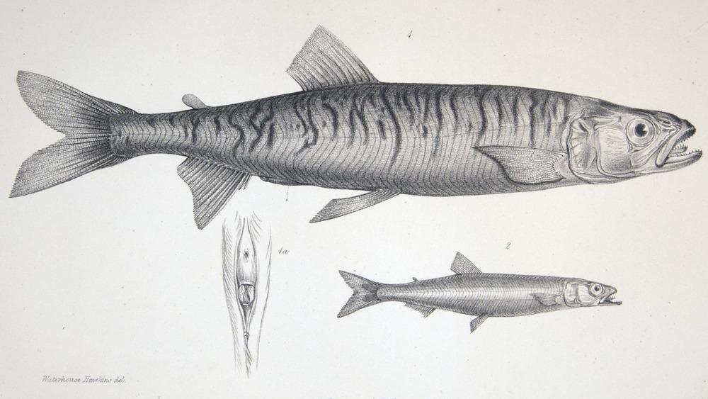 Image of Darwin-F8.3-1838-zzzzzz-det-00130-bf24
