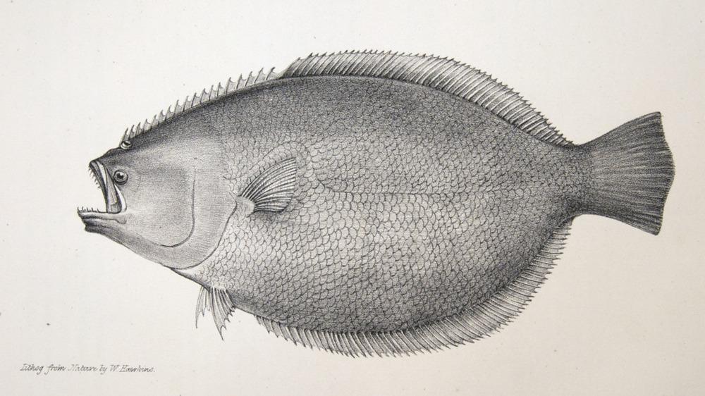 Image of Darwin-F8.3-1838-zzzzzz-det-00138-bf26