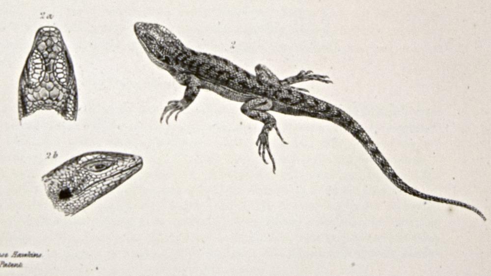 Image of Darwin-F8.3-1838-zzzzzzz-det-b00006-yf03