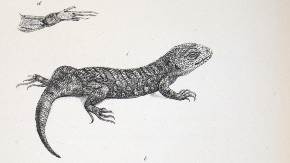 Image of Darwin-F8.3-1838-zzzzzzz-det-b00012-yf06-1