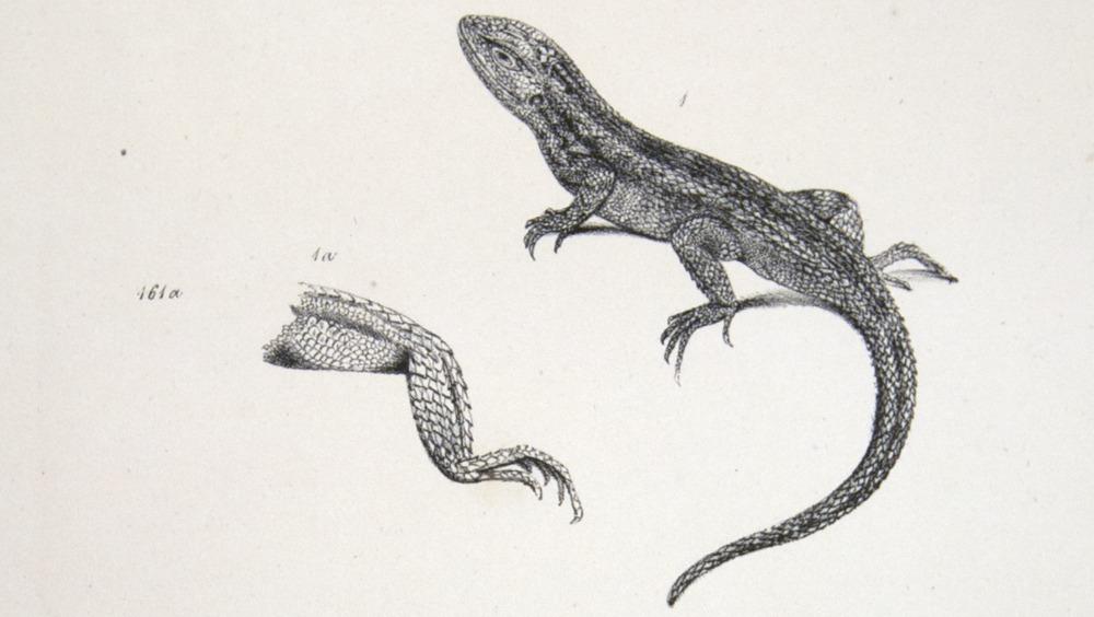 Image of Darwin-F8.3-1838-zzzzzzz-det-b00014-bbf08-2
