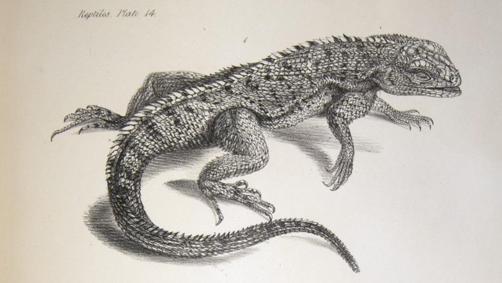 Image of Darwin-F8.3-1838-zzzzzzz-det-b00026-yf14-1