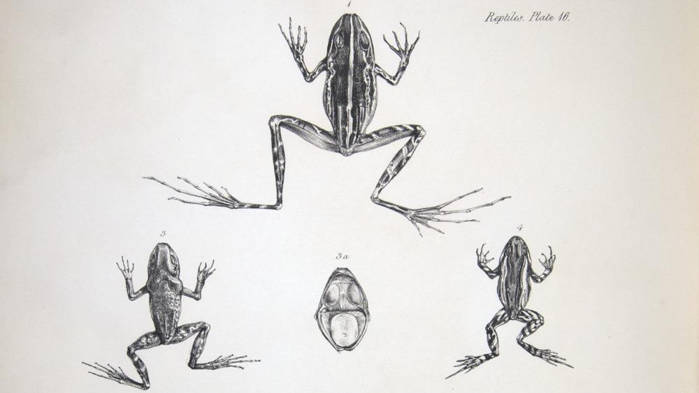 Image of Darwin-F8.3-1838-zzzzzzz-det-b00030-yf16-1