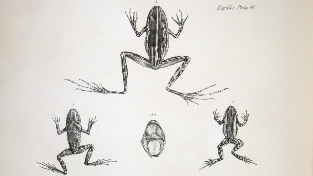 Image of Darwin-F8.3-1838-zzzzzzz-det-b00030-yf16-2