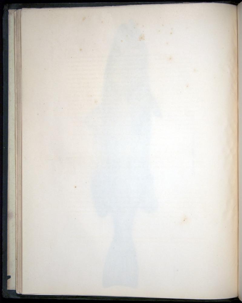 Image of Darwin-F8.3-1838-00008-bzf04