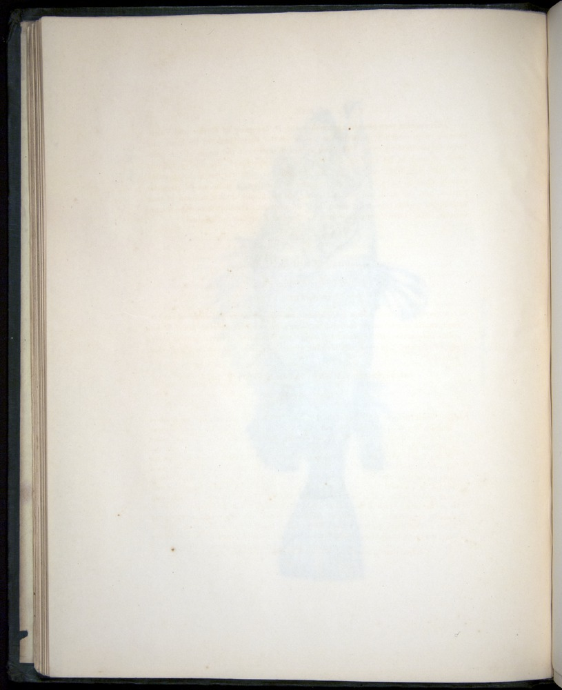 Image of Darwin-F8.3-1838-00034-zf07