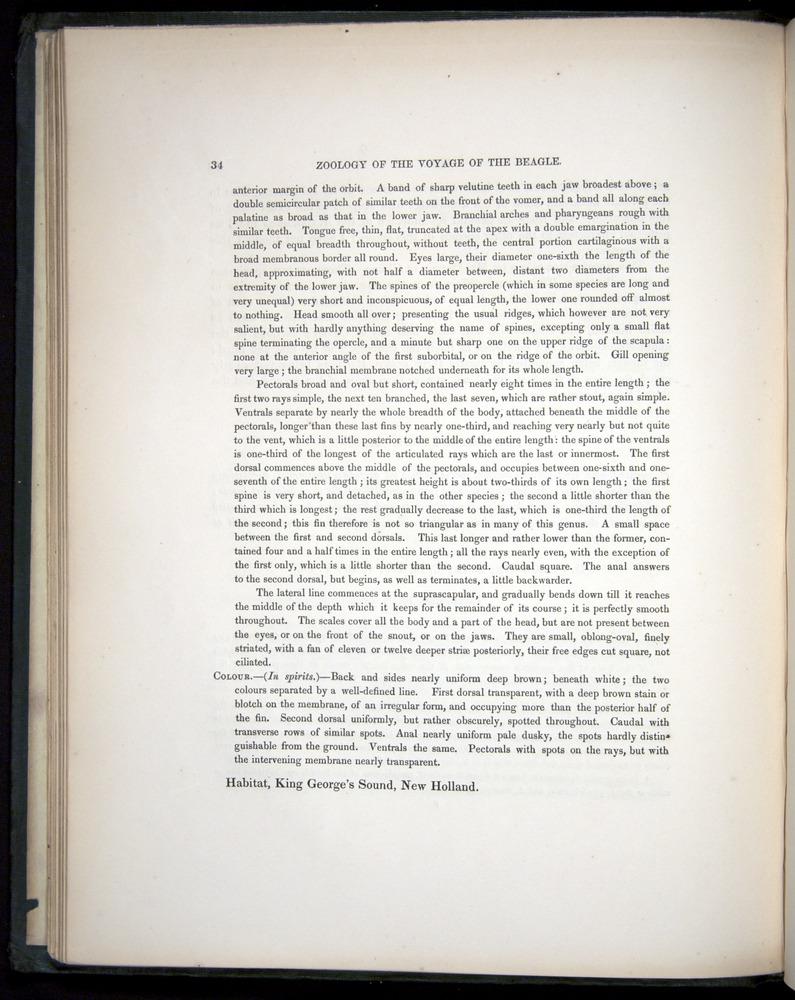 Image of Darwin-F8.3-1838-00034