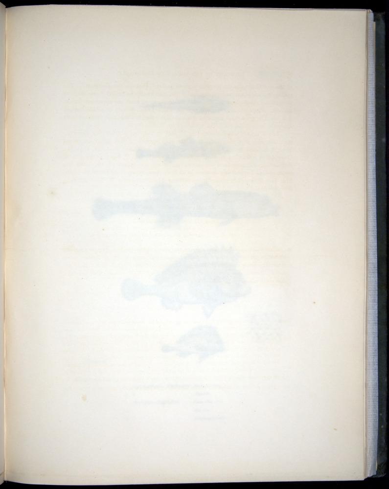 Image of Darwin-F8.3-1838-00038-af08