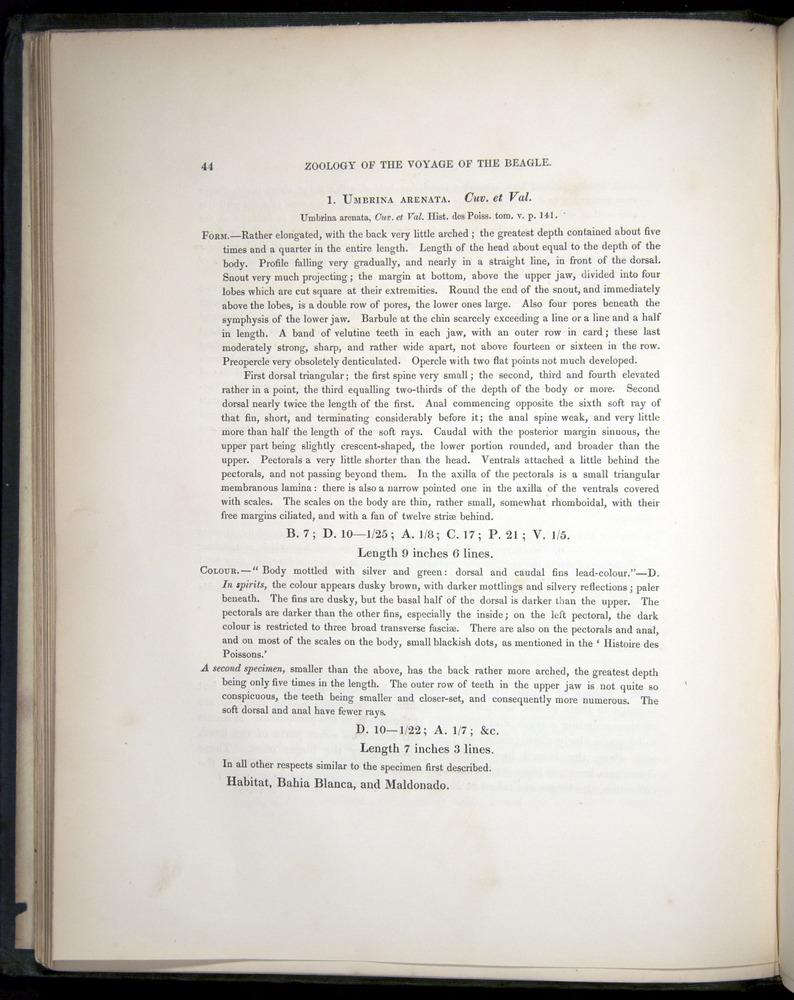 Image of Darwin-F8.3-1838-00044