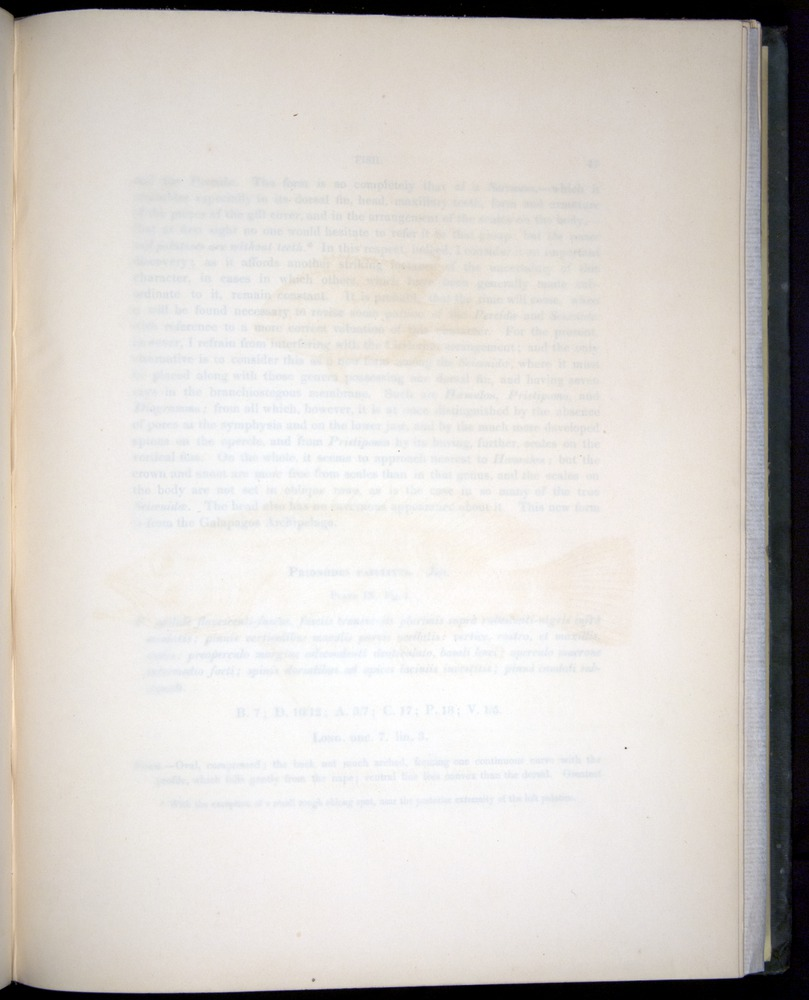 Image of Darwin-F8.3-1838-00046-yf09