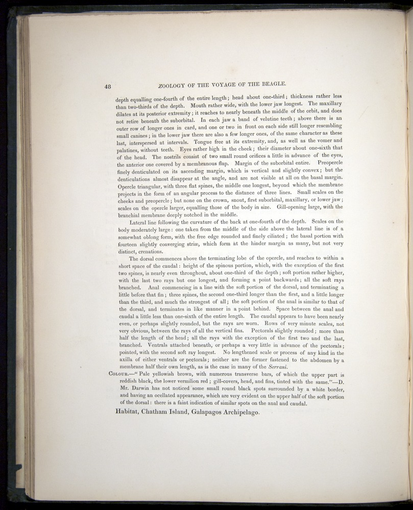 Image of Darwin-F8.3-1838-00048