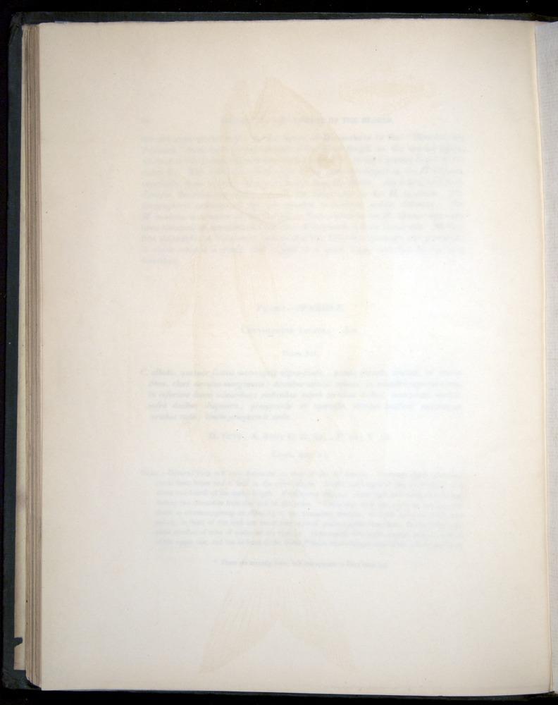 Image of Darwin-F8.3-1838-00056-bf12