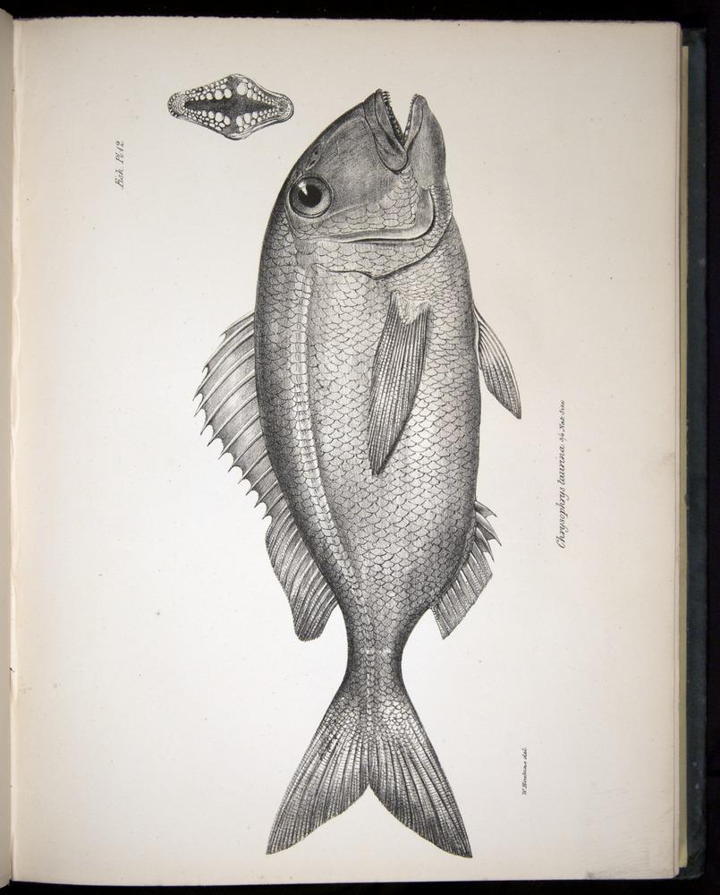 Image of Darwin-F8.3-1838-00056-yf12