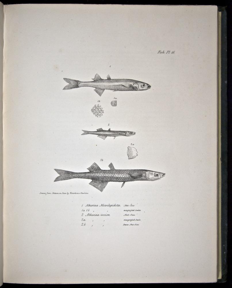 Image of Darwin-F8.3-1838-00078-cf16
