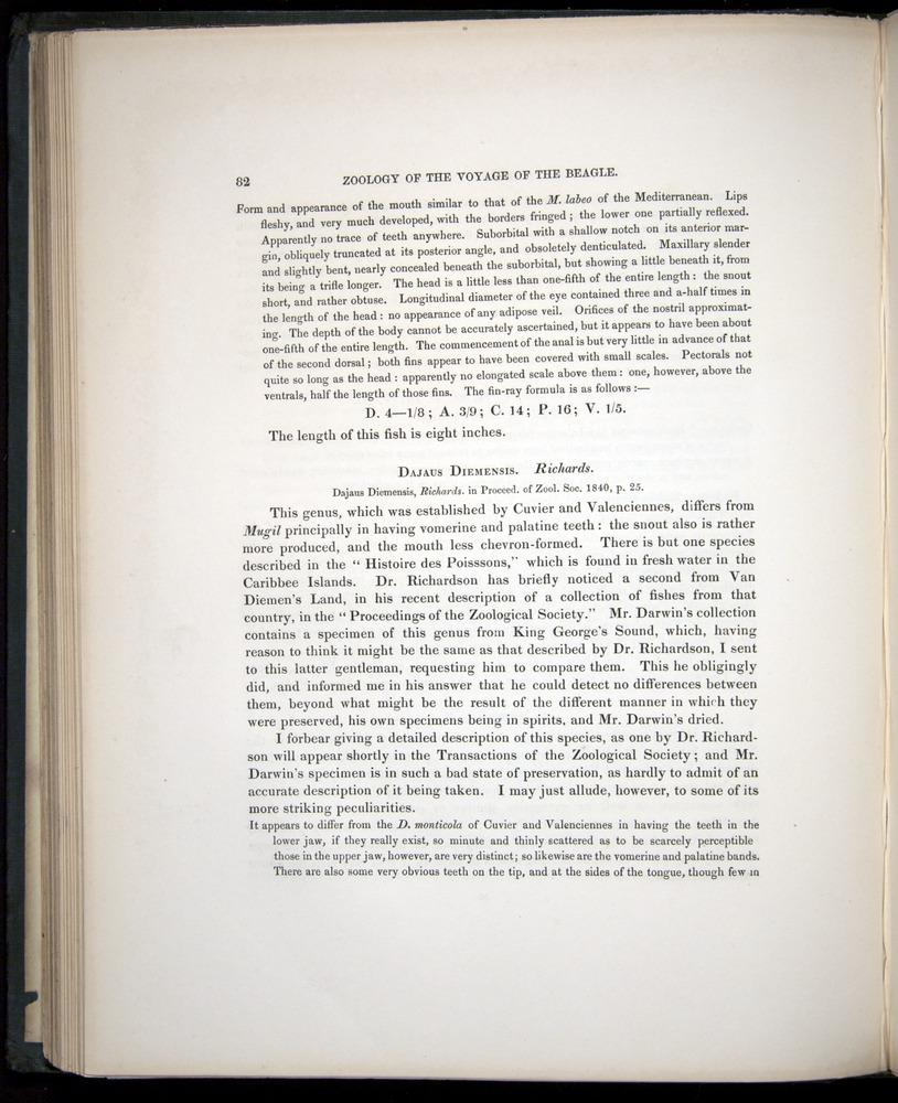 Image of Darwin-F8.3-1838-00082