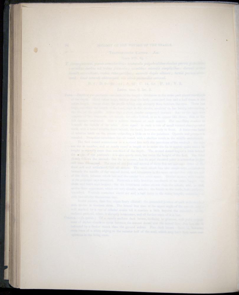 Image of Darwin-F8.3-1838-00094-bf19