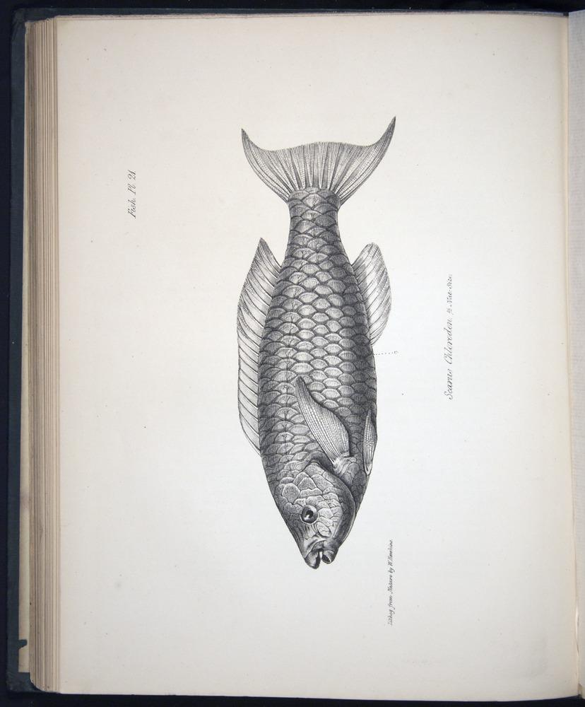 Image of Darwin-F8.3-1838-00104-bf21