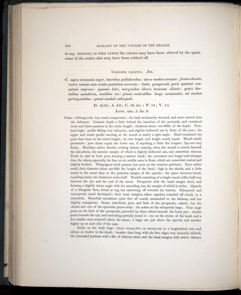 Image of Darwin-F8.3-1838-00104
