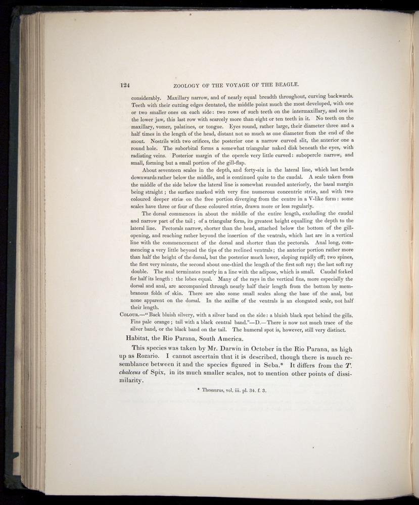 Image of Darwin-F8.3-1838-00124
