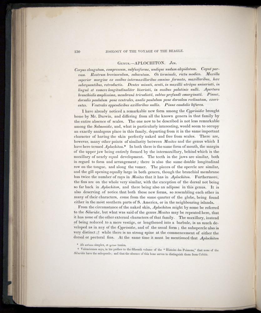Image of Darwin-F8.3-1838-00130