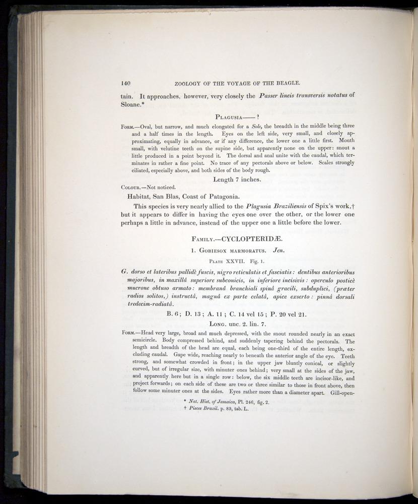 Image of Darwin-F8.3-1838-00140