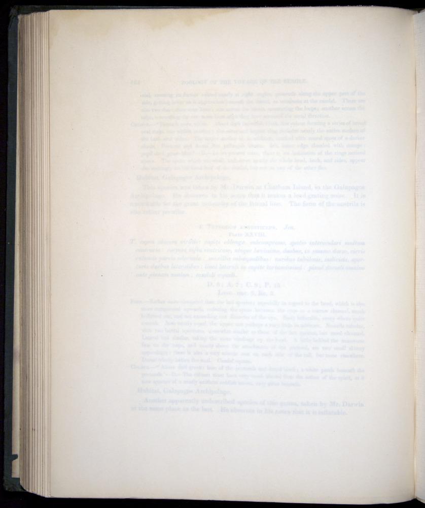 Image of Darwin-F8.3-1838-00154-bf28