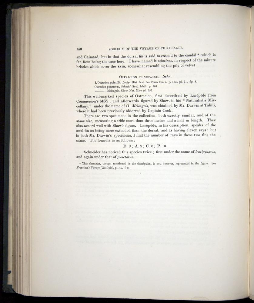 Image of Darwin-F8.3-1838-00158-bf28