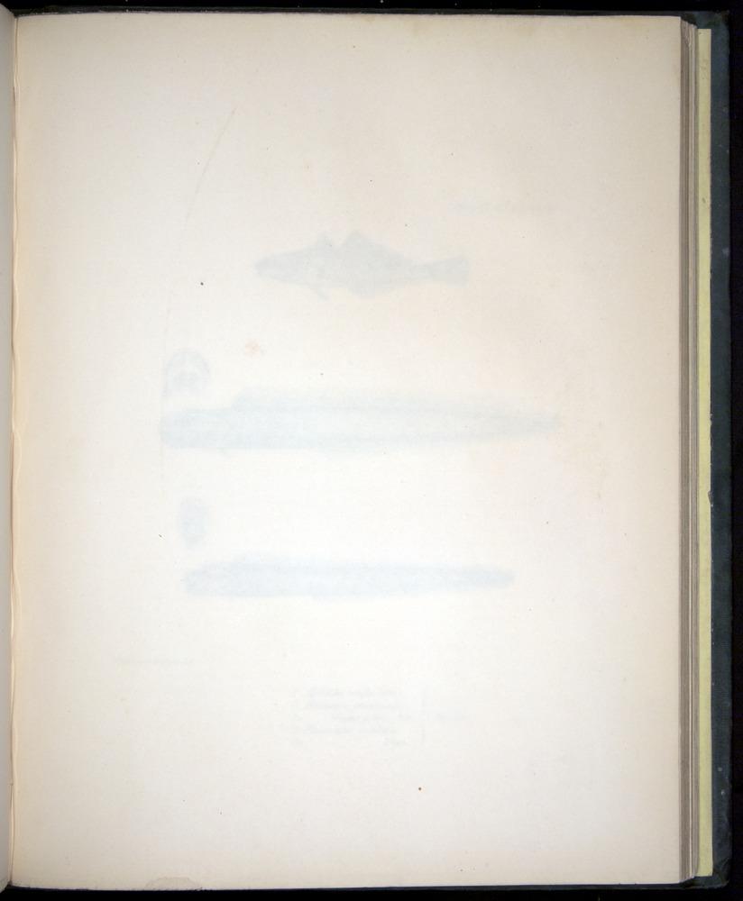 Image of Darwin-F8.3-1838-00160-af29