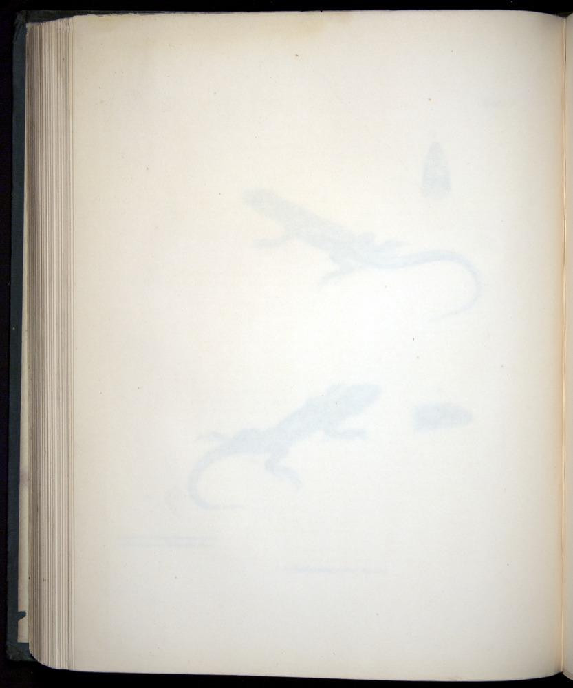 Image of Darwin-F8.3-1838-b00004-bzf02