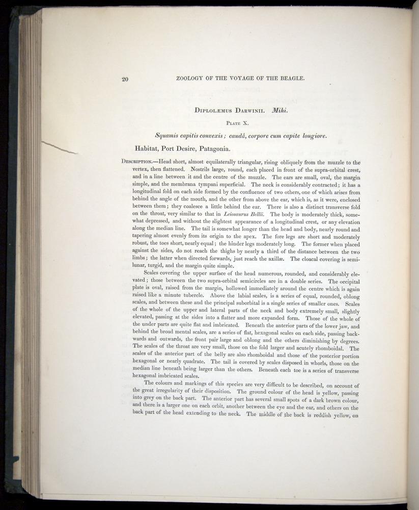 Image of Darwin-F8.3-1838-b00020