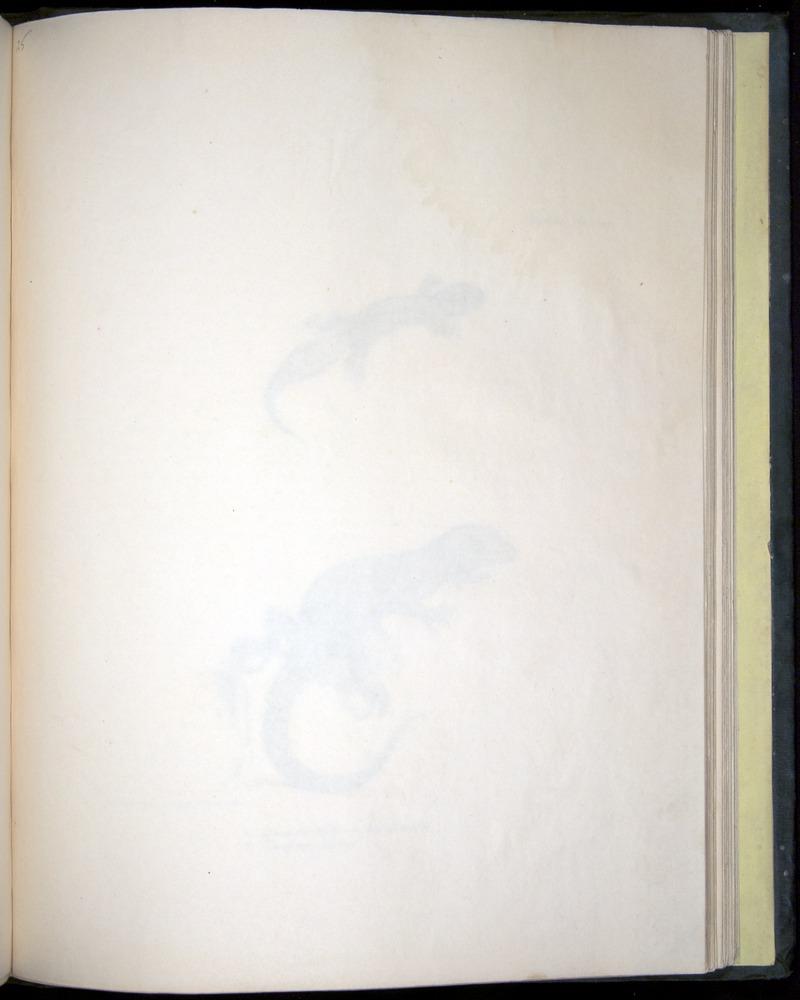 Image of Darwin-F8.3-1838-b00024-af13
