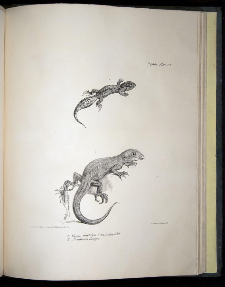 Image of Darwin-F8.3-1838-b00024-yf13