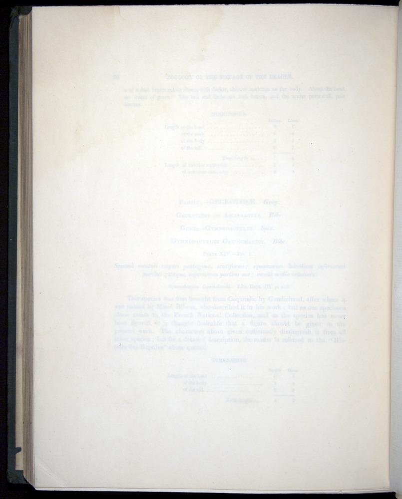 Image of Darwin-F8.3-1838-b00026-bf14