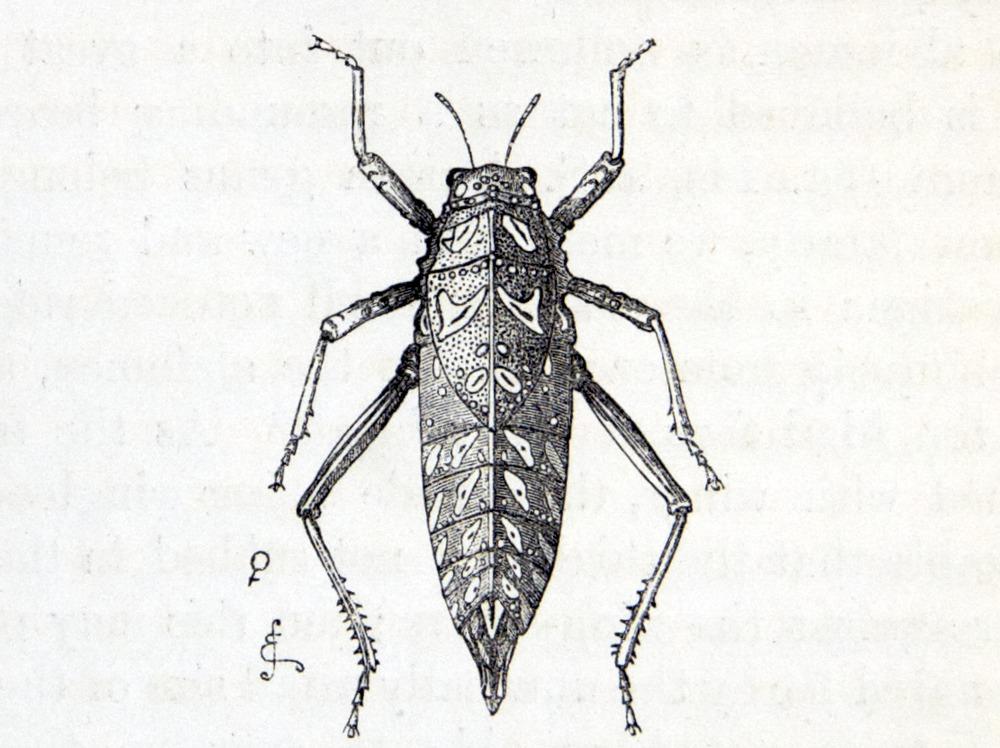Image of Darwin-F937.1-1871-zzzz-det-358-2