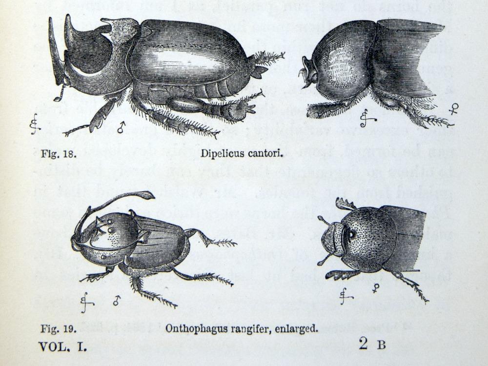 Image of Darwin-F937.1-1871-zzzz-det-369-3
