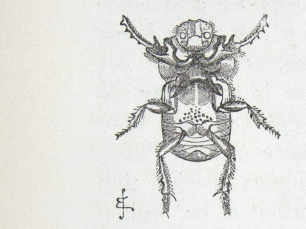 Image of Darwin-F937.1-1871-zzzz-det-372