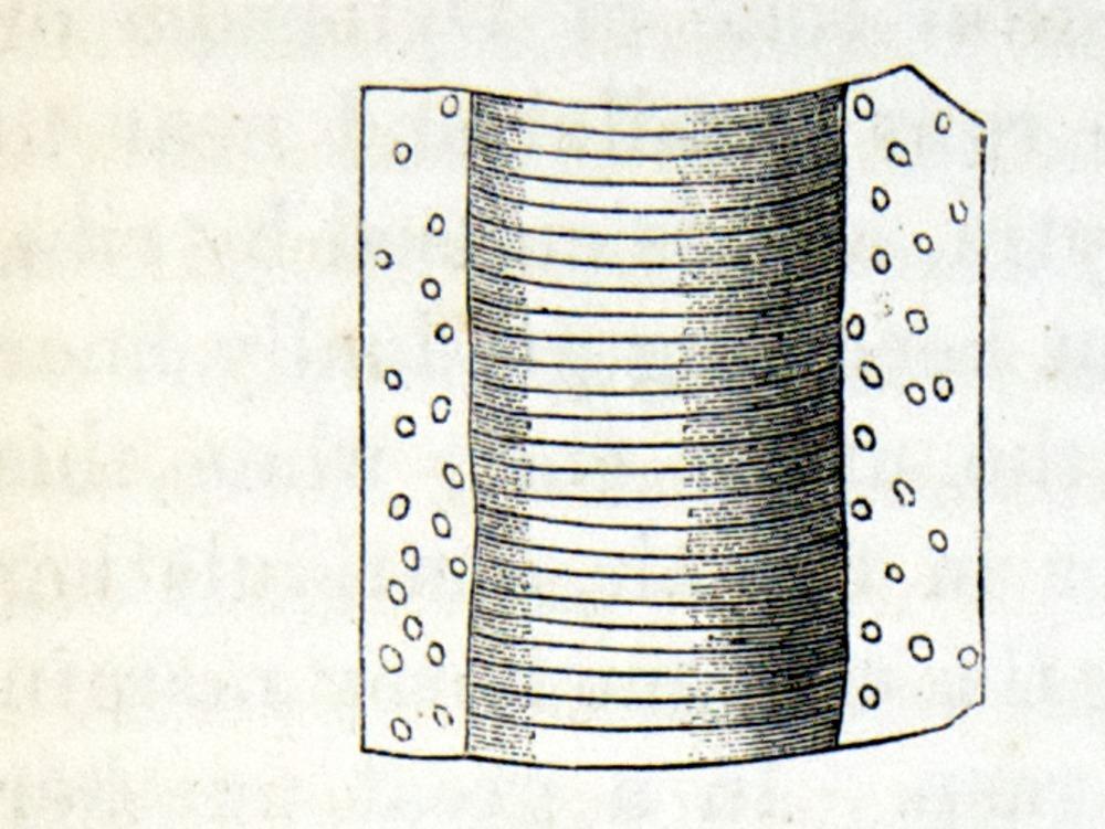 Image of Darwin-F937.1-1871-zzzz-det-379-2