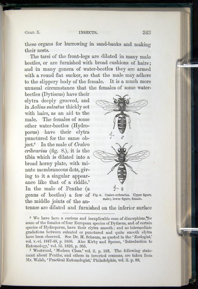 Image of Darwin-F937.1-1871-343