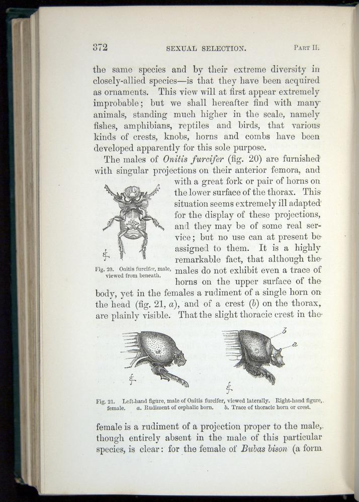 Image of Darwin-F937.1-1871-372