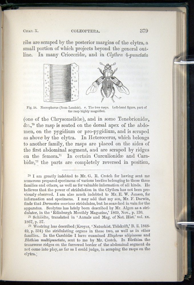 Image of Darwin-F937.1-1871-379