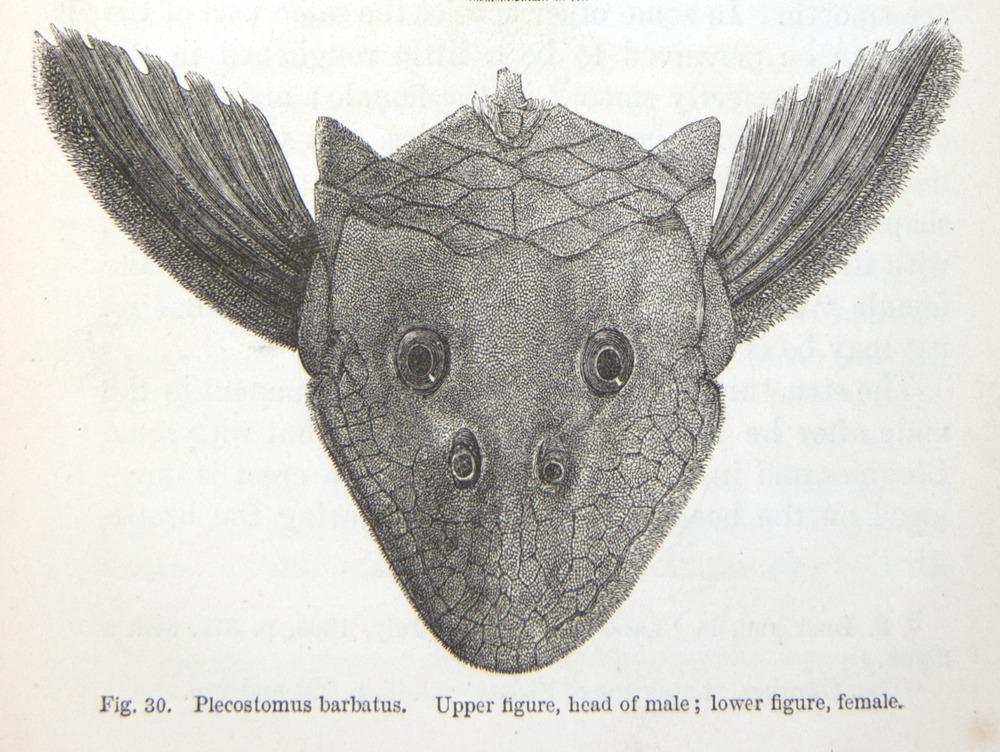 Image of Darwin-F937.2-1871-zzzz-det-011-2